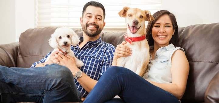 6 trucos para no tener problemas con tu mascota en tu departamento