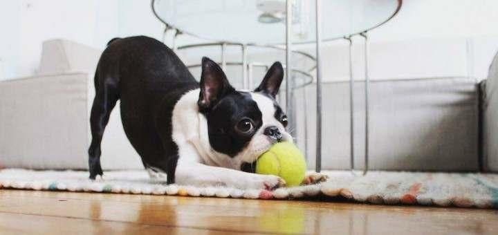 Trucos para vivir en un departamento con una mascota 4