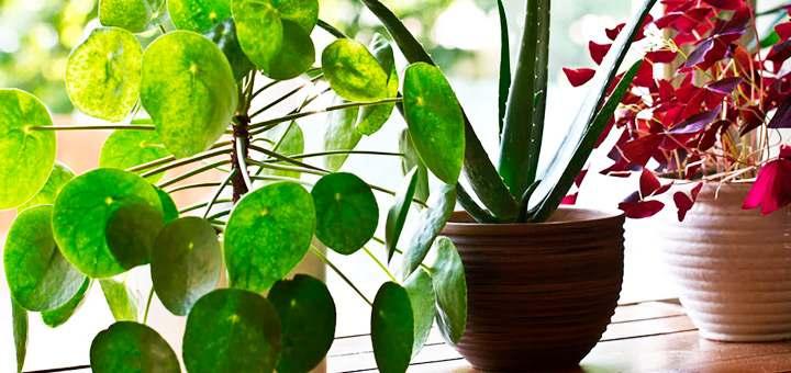 8 tips para decorar tu departamento este verano