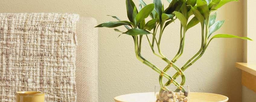 mejores plantas para departamento miraflores