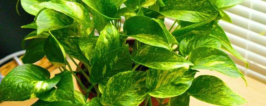 Conoce las mejores plantas para tu departamento en Miraflores