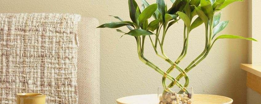 actual mejores plantas departamento miraflores
