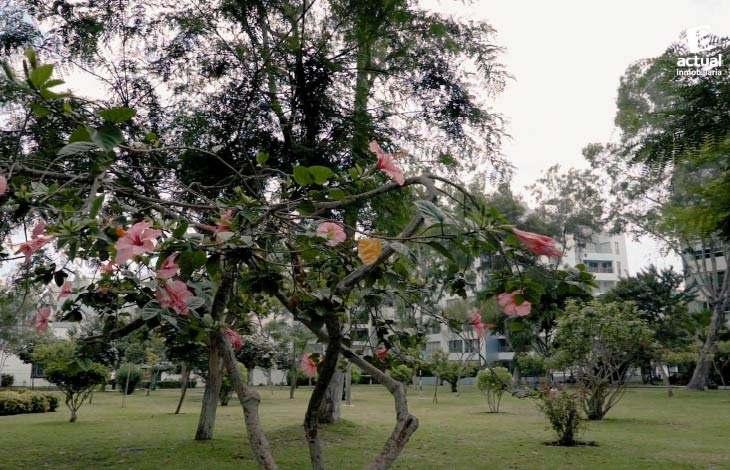 Parque Blume