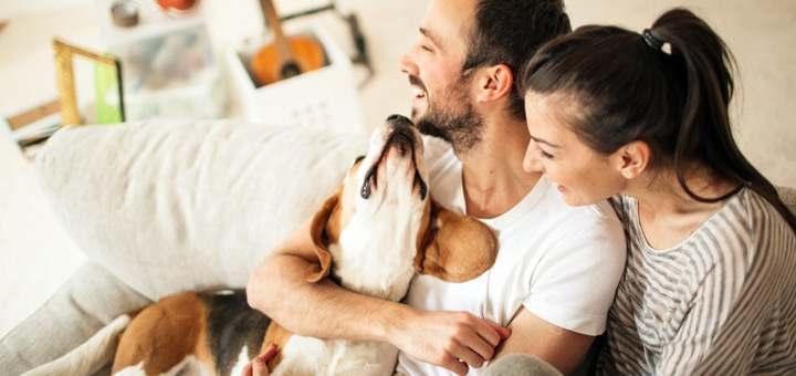 Las mejores razas de perros para tu departamento